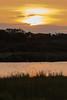 2018 02 01_Sabie River-1 (Jonnersace) Tags: lowersabie sabieriver cattleegret flight river water sunset watercolour trees flying wildwingssafaris canon canon7dii canon100400ii