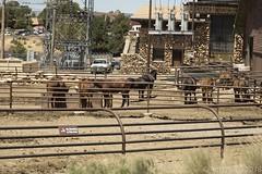 SedonaVacation_May2018-1783 (RobBixbyPhotography) Tags: arizona grandcanyon sedona vacation railroad tour train travle
