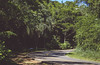 Sharp bend. (Pablin79) Tags: footpath woods lush foliage tree country road idyllic scenery forest nonurban scene outdoors sky green summer travel trees beautiful sunlight light grass trip colors lines curves shadows misiones argentina
