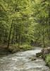 Forest Stream (Eddie Hyde ARPS) Tags: france alps savoie