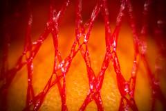 Fruity Macro (Robert Yeardley) Tags: fruit hmm macromondays red orange macro 50mm canon netting abstract