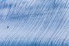 Solitario (Tito Paez - Paisaje y Naturaleza) Tags: antartida barkeuropa penguinisland southshetlandislands díadelatierra earthday pingüino penguin chinstrap barbijo ice hielo iceberg rugoso pygoscelisantarcticus antarctica antártida islasshetlanddelsur islapingüino nature naturaleza paisaje landscape groove canaleta azul blue argentina rugged solitario ave solitary lonely bird spheniscidae sphenisciformes animal peninsula sea mar water agua frozen conjelada canon canon6d canonef100400mmf4556lisusm tallship velero fragata sailing sail texture line