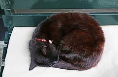 Amstercat (kirstiecat) Tags: amstercat amsterdam blackcat cat kitty caturday catnap purr blackcatsarethebestcats dutch netherlands gato chat katze feline