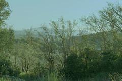 brume sur l étang de Thau (guy dhotel) Tags: herbes landscape misty pond étang sète thau brume