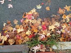 11-05-17 Dayton 65 leaves, fall color (Chicagoan in Ohio) Tags: dayton clouds sun sunhalo leaves fallcolor