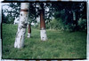 Birch Bark Harvest (Robert Drozda) Tags: fairbanks alaska nordalelanding chenariver birch tree bark harvest paperbirch betulapapyrifera film fujicolor200 olympusstyluszoom bluemooncamera sloppyborder drozda