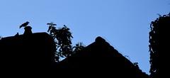 """""""Non andare"""" / """"Don't go"""" (Loredana Consoli) Tags: silhouette tetti blue bluesky bretagna brittany france uccelli birds comignolo chimney roofs"""