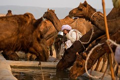 Pushkar Mela. Rajasthan (Tito Dalmau) Tags: rabari man camels water fair mela pushkar rajasthan india