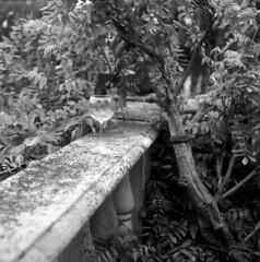 The New Jersey State Botanical Garden at Skylands (Sergei Prischep) Tags: rolleiflex automat k4a zeisstessar3575 6x6 120film arista eduultra100 d76 120 film
