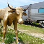 Cow sculpture & train diner in front of 1880 Town, South Dakota thumbnail