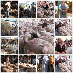 la Fête de la Transhumance in Die (FR) - June 2006 (♥ Annieta  very busy) Tags: summer feest people holiday france nature beautiful animal festival canon wow french ilovenature vakantie interestingness fdsflickrtoys fiesta sheep corse scout powershot explore excellent g2 frankrijk fête mouton happening allrightsreserved corsican 1on1 schaap powershotg2 drôme canonpowershotg2 i500 annieta theworldthroughmyeyes thebiggestgroup kakadoo multicoloredobject gtranshumance firsttheearth sustainabledrive v209my807 bochoven vanbochoven usingthisphotowithoutpermissionisillegal