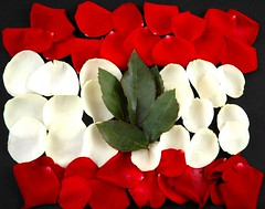 B7aaBak Ya LeeBNaaN .. ( .. Moush .. ) Tags: flowers red roses lebanon white flower green rose nikon flag d70s