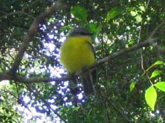 Fraser Island (frizzetta) Tags: birds outdoor australia queensland fraserisland barrierreef