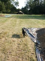 PICT0178 (wickenpedia) Tags: archaeology cat mog timeteam wicken wwwwickenarchaeologyorguk leocassandramcneir