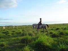 Venezuelan Cowboy, Tucupita (Matt Hamm) Tags: horse southamerica cowboy farm venezuela delta rancho tucupita guacho