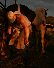 farrier (duanekeys) Tags: horses horse usa farm horseshoes loh farrier horseshoeing strobist