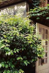 aoyama6 (gracias!) Tags: green film japan architecture tokyo pentax ivy aoyama omotesando mz5  dojunkaiapartment