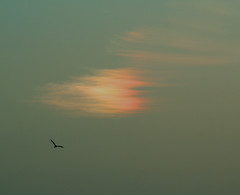 La nube que se creía arco iris (Silvia de Luque) Tags: sky cloud colors arcoiris rainbow seagull colores cielo gaviota nube alhambra2006 silviadeluque