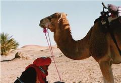 sombra touareg - Touareg shadow (El Garza) Tags: sahara desert camel morocco desierto marruecos camello touareg merzouga garza elgarza