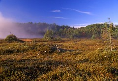 RVP-06-9-30 (Michael Costolo) Tags: nh velvia bog amherst ponemah nhfall06