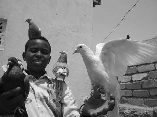 boy and birds II