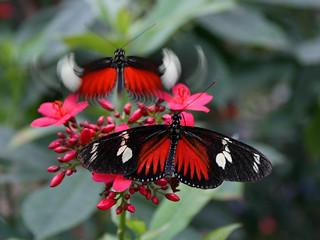 Vlinderpaviljoen Artis
