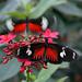 Vlinderpaviljoen Artis - by ♥siebe ©