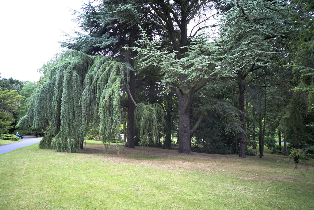 Trees in the Botanic Gardens
