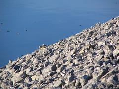sten och vatten (Skapande) Tags: sten vatten umelven