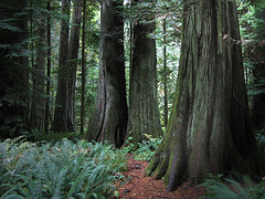 ...and into the deep, dark woods... (axiepics) Tags: trees canada nature forest coast woods rainforest bc pacific image path britishcolumbia sold games vancouverisland utata winner getty environment forests provincialpark portalberni cathedralgrove gettyimages preservation alberni oldgrowth gettyimage raincoast 123ac naturesgallery generouscomments gettyimagescom thegoldenmermaid duelwinner theduelgroup friendlygames 10anon gameswinner gettyimagesold gettychoiceaugsept09 gettyimagesaxiepics friendlygameswinner gettyimageaxiepics augtooct09getty firendlygameswinner gettysold licensedforsale cathedralgroveprovincialpark gettyimageslicensedforsale copyrightalexskellyallrightsreserved