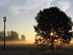 lamp________________tree (Jeremy Stockwell) Tags: light mist tree lamp sunrise dawn still quiet peace silent streetlamp peaceful indiana calm lamppost silence photofriday hush stillness canonpowershots1is jeremystockwellpix photofridaysunrise