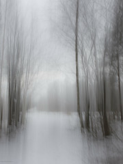 white road (sami kuosmanen) Tags: kuusankoski kouvola winter white taivas tree finland forest talvi trees tie road photography puu pitkä valo valotus luonto light landscape long exposure lumi suomi sky snow intentionalcameramovement icm