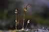 Mama, Papa, Kind.... Familienleben auf der Mauer - Meine kleine Welt (Uli He - Fotofee) Tags: ulrike ulrikehe uli ulihe ulrikehergert hergert nikon nikond90 fotofee makro moos garten nass regen regenwetter regentropfen eier ostern osterwetter feucht fröhlich bunt froheostern mama papa kind familie familienleben mauer mauermoos tau tautropfen zwerge zwerg zipfelmützen zipfelmütze