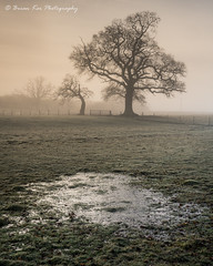 Early Morning Mist (.Brian Kerr Photography.) Tags: cumbria edenvalley lazonby mistymorning landscapephotography formatthitech sonyuk vanguarduk firecrest altasky45d a7rii photography outdoor opoty outdoorphotography onlandscape nature naturallandscape natural briankerrphotography briankerrphoto landscape frozen tree countryside owl bird animal mist sky field grass park cow sheep