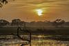 Sunset at Keoladeo National Park (deepak.abhishek) Tags: sunset landscape landscapephotography nature naturephotography bharatpur keoladeonationalpark rajasthan india ngc birds forest trees lake