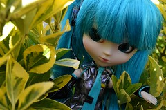 First Pictures Outside (7/9) (Kuroe-Chan) Tags: pullip groove hatsunemiku miku pullipstock vocaloid