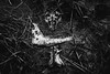 Glendalough Ritual (Fabrizio Ara) Tags: samyang35mmt15asifumc samyang 35mm f14 1435 fahc manualfocus sony a7 ilce7 manualfocuslens vintagelens samyang35mm14 mono black white bianco nero bw blackwhite blackandwhite blancoynegro monochrome bn dark monochromatic ireland dublin death creepy grime shadow disturbia postapocalyptic eerie weird damned cvlt culto hell satanic skull bones disturbed surrealism gothic mystery occult occultism paganism disturbing evil devil esoteric lucifer hermetism mysticism blackness alchemic esoterismo