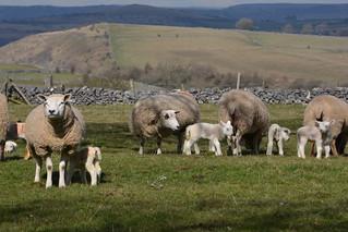 Rose Farm, Sheldon, Peak District National Park, Derbyshire Dales, England.