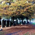 Flaybrick Autumn #1