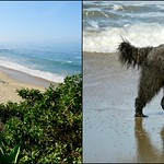Benni's Beach and Benni thumbnail