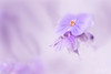 Te protéger...! - Protect you...! (minelflojor) Tags: fleur feuille tige flou macro bokeh pistil doux pastel artistique flower leaf stem blur soft artistic tamronsp90mmf28dimacro11vcusd