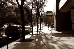 On The Street Where You Live - HSS! (Daryll90ca) Tags: downtown sepia sidewalk ontario canada ontariocanada shadows shadow tree trees sliderssunday hss pharmacy
