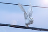Take off (NicoleW0000) Tags: snowyowl owl takeoff flight lensflare photoshop wings eyecontact wildlife nature sky