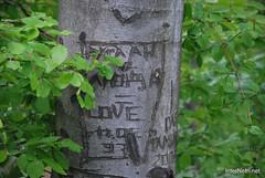 Ботанічний сад імені Гришка Буковий гай InterNetri  Ukraine 117