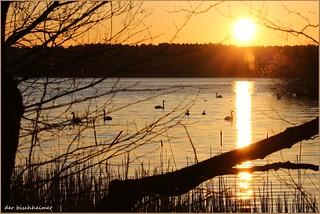 Ein friedlicher Morgen