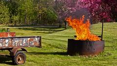The Burning (Bob's Digital Eye) Tags: bobsdigitaleye burning canon canonefs55250mmf456isstm flames flicker flickr garden may2018 orange rust t3i laquintaessenza