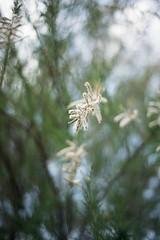 Flowers 📷 (gwendoline.lereste) Tags: nikon nikond810 d810 flower flore flora fleur vert verde green blanc blanco white