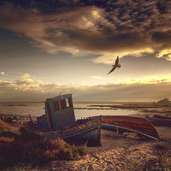 Efigenia (M a r i k o) Tags: iphone iphonex iphoneography iphonephotography mobile mobilephotography mariko square boat boats fishingboat old decay decayed beach stranded bird gull seagull sunrise sun light sky clouds carrasqueira comporta setúbal alentejo portugal alcácerdosal procamera hdr snapseed mextures stackables lenslight superimpose