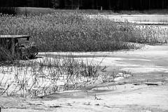 6Q3A6114 (www.ilkkajukarainen.fi) Tags: blackandwhite mustavalkoinen suomi suomi100 espoo finland finlande happy life visit travel traveling travelworld nature luonto suomenoja eu europa scandinavia spring kevät