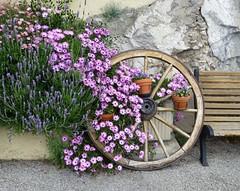 à Sainte-Agnès (b.four) Tags: flowers fiori fleurs roue wheel ruota banc panchina bench sainteagnès mentonnais alpesmaritimes